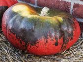 Marrow-coloured — Stock Photo