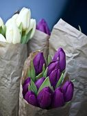 Tulips in paper — Stock Photo