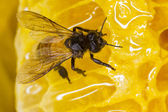 Biene auf nest — Stockfoto