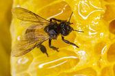 Včela na hnízdo — Stock fotografie