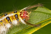 Plakker caterpillar — Stockfoto