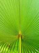 Palm arka plan ayrılmak — Stok fotoğraf