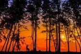 Deer via silhouette — Stock Photo