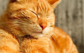 Relaxed Cat — Stockfoto