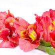 Bouquet of gladioluses on white — Stock Photo