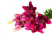 Bouquet of lilies on white backdrop — Stock Photo