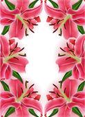 Tarjeta de regalo hermoso con lirios rosados, puede ser utilizado como felicitación día de la mujer — Vector de stock