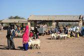 Cattle breeding market — Photo
