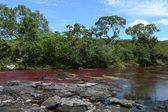 Canio-Cristales river in Colombia — Stock Photo