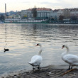Embankment of the Vltava river — Stockfoto
