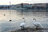 Embankment of the Vltava river — Stock Photo