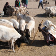 Livestock market — Stock Photo #39564691