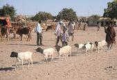 The livestock market — Stock Photo