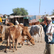 Livestock market — Stock Photo #41224515