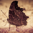 Butterfly rest on ground - Stock Photo