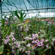 Green house orchid flower nursery - Stock Photo