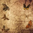 Butterfly wood grunge background — Stock Photo
