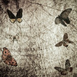 Butterfly wood grunge background — Stock Photo #17126781