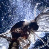 Insecto animal Science microscopia — Foto de Stock