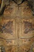 Tortoise turtle shell texture — Stock Photo