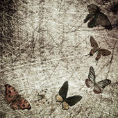 Butterfly wood grunge background — Zdjęcie stockowe