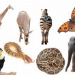 Wild animal collection - Stock Photo