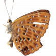 Butterfly side view — Stock Photo #17170181