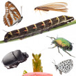 Insects set collection — Stock Photo #17171641