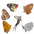 Butterfly set side view collection — Stock Photo #17171871