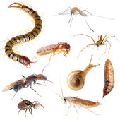 Insect pest bug set — Stock Photo