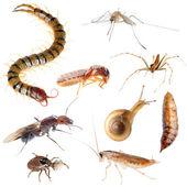 Zestaw błąd owadów szkodników — Zdjęcie stockowe