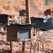 Honey bee hives - Stock Photo