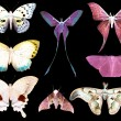 Butterfly moth collection — Stock Photo
