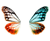 Butterfly wing — Foto Stock