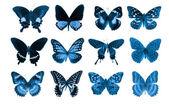 Collection papillon — Photo