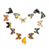 Butterfly heart sharp frame — Foto Stock