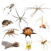 Spider isolated collection — Stock Photo