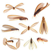 Termite white ant bug isolated collection — Stock Photo