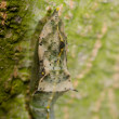 Insect butterfly cocoon - Stock Photo