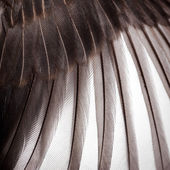 Bird wing texture — Stock Photo