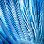 Bird wing feather — Stock Photo