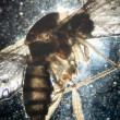 Foto Stock: Science microscopy animal insect