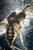 Science microscopy animal insect — Stock Photo