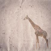 žirafa staré grunge papír textury — Stock fotografie