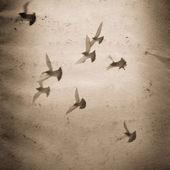 Fliegende taube gruppe alt grunge papier textur — Stockfoto