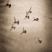 Flying dove group old grunge paper texture — Stock Photo