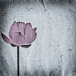 Lotus flower old grunge paper texture — Stock Photo