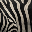 Zebra pattern — Stock Photo #17627455