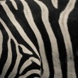 Zebra pattern  — Stock Photo