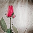 Stock Photo: Red rose flower old grunge paper texture